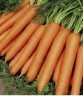 "Carrot ""Nantes 5"", Minigarden Organic Seeds"